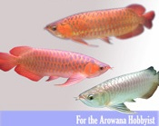 Arowana Care: The truth about keeping your arowana healthy and alive