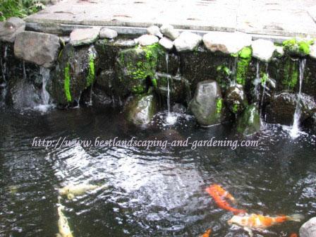 Kolam ikan dengan relief natural stone