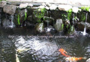 Kolam koi dengan relief batu alam