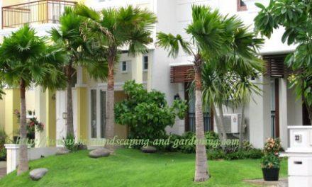 Taman Rumah Yang Indah dan Sehat