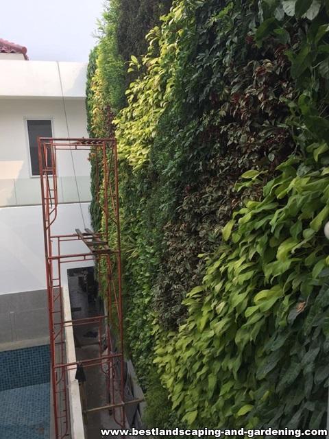Desain dan Pengerjaan Vertical Garden