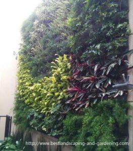 Vertical garden at town house